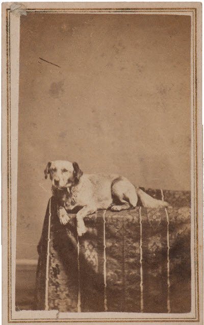 Abraham Lincoln's dog Fido