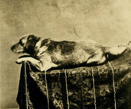Fido was Abraham Lincoln's dog